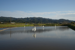 Gokyu-san_photo_04
