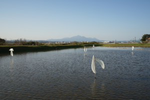 Gokyu-san_photo_09