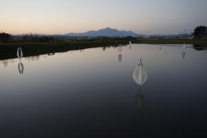 Gokyu-san_photo_16